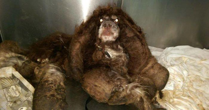 Abandoned Dog Gets The Transformation Of A Lifetime When 6 Pounds Of Mats Are Removed