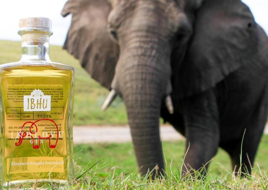 Why this South African gin is made with elephant dung